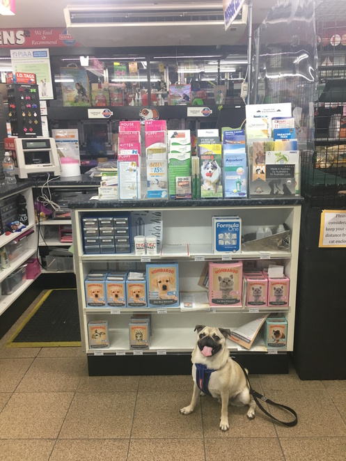 pet city, pet shop, brisbane, southside, southern suburbs, mt gravatt, upper mt gravatt, abbeville street park, puppy school, puppy pack, puppy information, pet care information, pet information, dog friendly, wishart