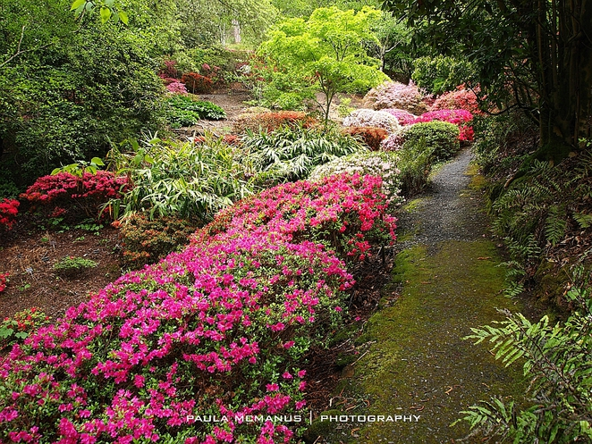 Rhododendron Gully Mt Lofty Botanic Gardens