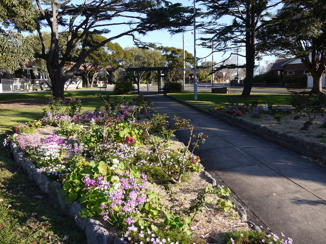 robson park, iron cove, the bay run, iron cove bay, parks, fun for kids, free, parks in Haberfield, parks in the Inner West