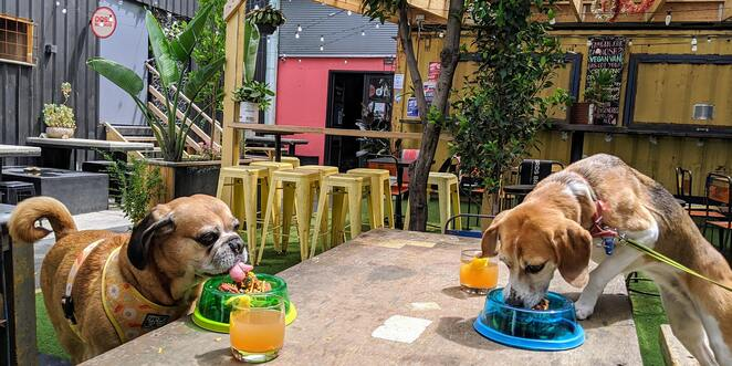 south melbourne port melbourne puppy pub crawl, community event, fun things to do, pooch friendly pub event, puppy pub crawl, pupsy, for dog lovers, dog owners, golden fleece hotel, west side ale works, the palace hotel, the tipsy cow, food and drink, entertainment
