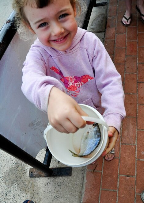 Each fish comes in a handy bucket, and the volunteers educate visitors on the correct way to feed them to the dolphins