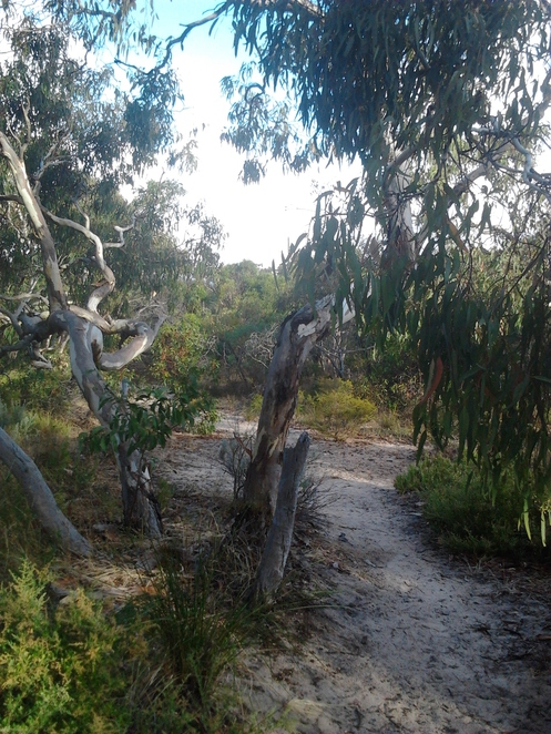 Aldinga, conservation park, bushland, native scrub, South Australia, wilderness