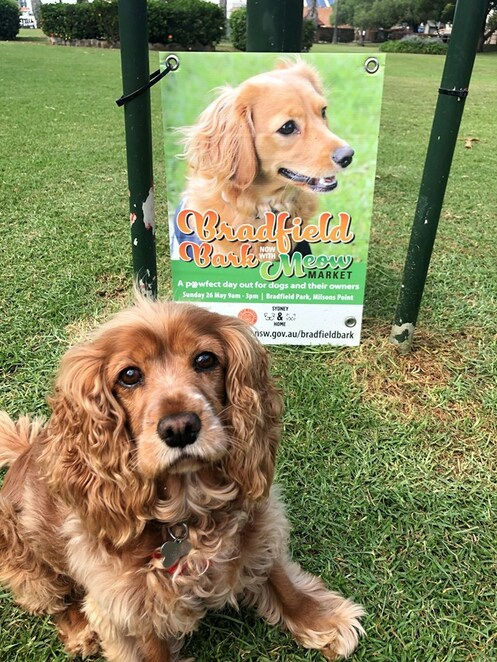 bradfield bark 2019, meow market 2019, community event, fun things to do, north sydney council, free event, bradfield park, paw fect day out for dogs, animal lovers, sydney harbour bridge, free kids activities, free event, food stalls, live music, market stalls, dog demonstrations, dr katrina and the wonderdogs, pet medical chillout zone