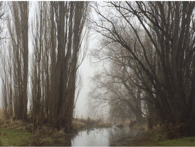 Canberra, winter, photography, fog, creek, best photography locations