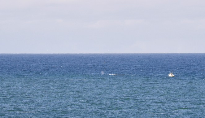 Watching Whales from Cape Bailey Track
