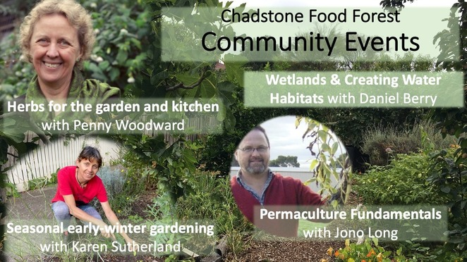 chadstone food forest community events 2020, herbs for the garden and kitchen, wetlands and creating water habitats, seasonal winter gardening, permaculture fundamentals, free online community events, garden lovers, sustainability, environmental, fun things to do, link health and community