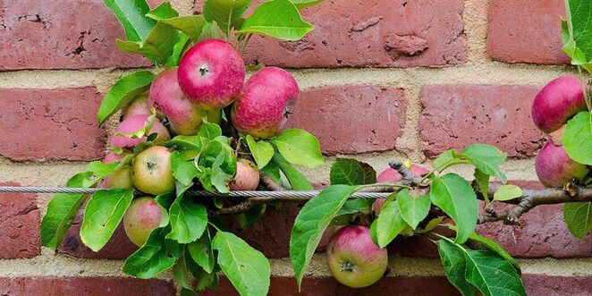 fruit trees for melbourne backyards 2020, community event, gardening, fun things to do, sustainable living maribyrnong, green thumbs, grow food not lawn, online gardening workshop, growing fruit in a small space, grow your own food