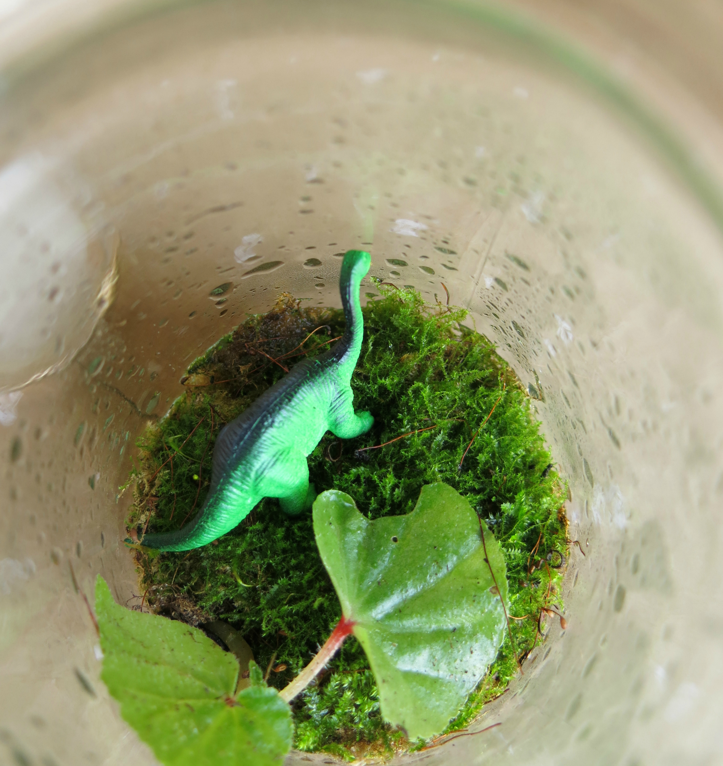 Garden Art Brisbane: Make A Terrarium