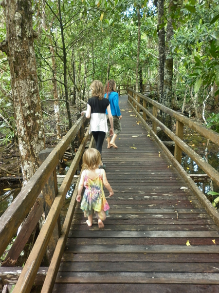 Marrdja Boardwalk, Cape Tribulation, Daintree, Boardwalk