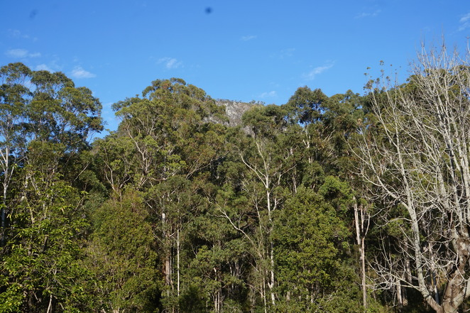 Mt Cooroora from Start of Track