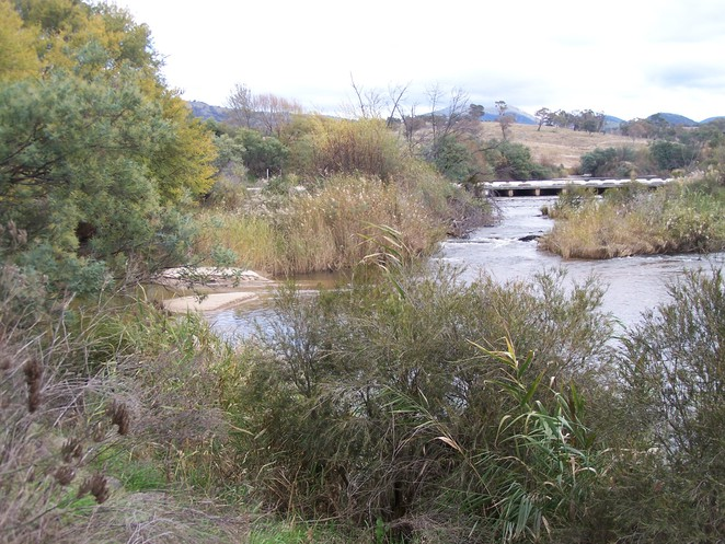 Murrumbidgee River, Point Hut Crossing, Canberra, swimming