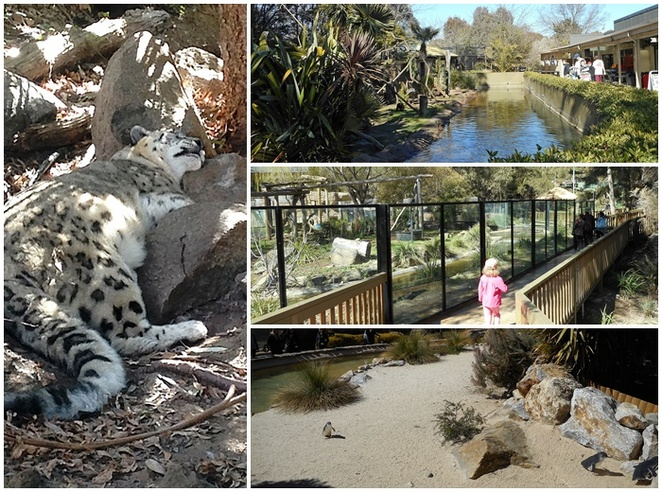 national zoo and aquarium, canberra, ACT, best zoo, australia, animals, kids, school holidays, places to go with kids,