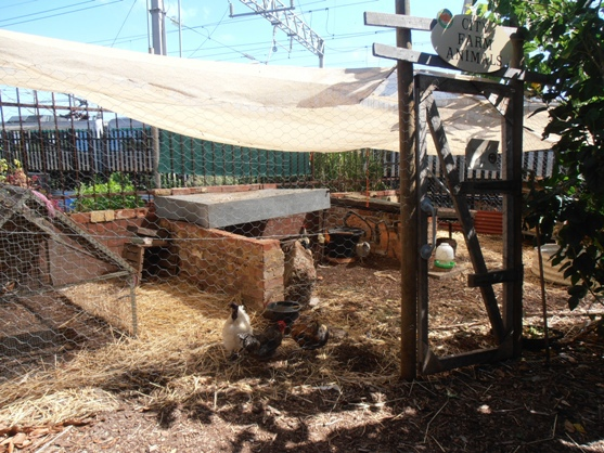 Perth City Farm's resident chooks