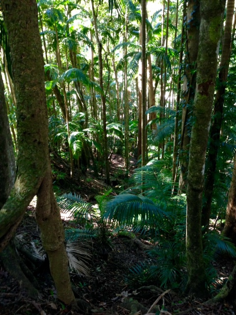 Rainforest Cafe, Mt Warning, organic food, wedding venue, party venue, healthy food, gluten free meals, Uki, subtropical rainforest, Lyrebird track, hike, Wollumbin Creek, Wollumbin National