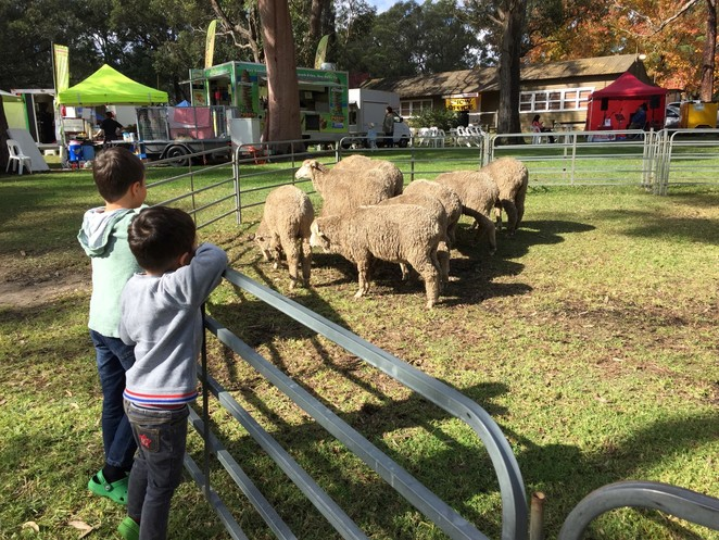 St ives show, Lilbusgirl reviews, Fun things for to do, fun for kids, Sydney local, weekend fun, family fun, north shore,