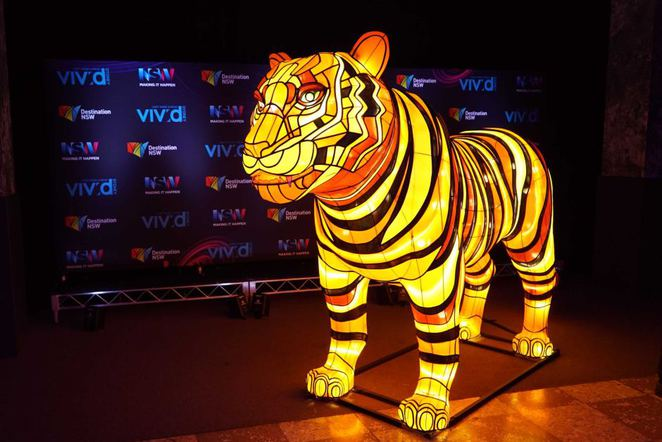 Vivid Sydney at Taronga Zoo - Test model of the Sumatran Tiger Jumilah