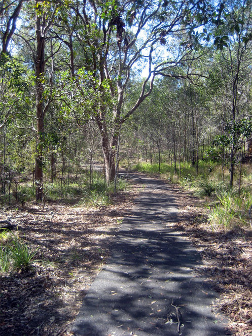 A path through one of the many bushland areas in Brisbane