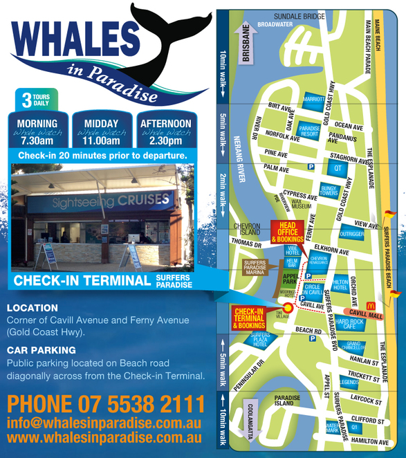 Whale watching Gold Coast, What's on Gold Coast, things to do Gold coast, Whales in Paradise, Gold Coast Whale Watching,