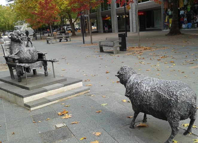 ainslies sheep, city walk, canberra, ACT, public art, sculpture