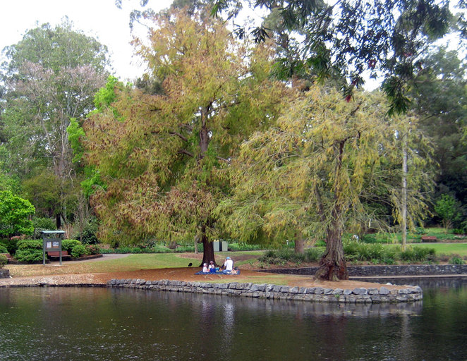 The lake behind the cafe at Brisbane Botanic Gardens