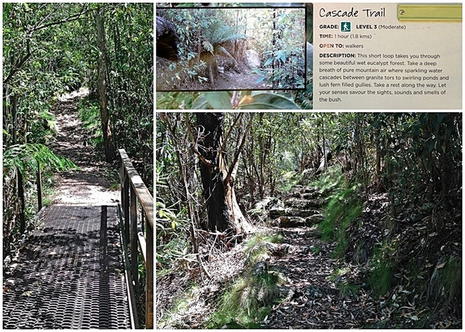 cascade trail, lyrebird trail, tidbinbilla nature park, bushwalks, walking trails, easy, short, national parks, ACT, canberra,