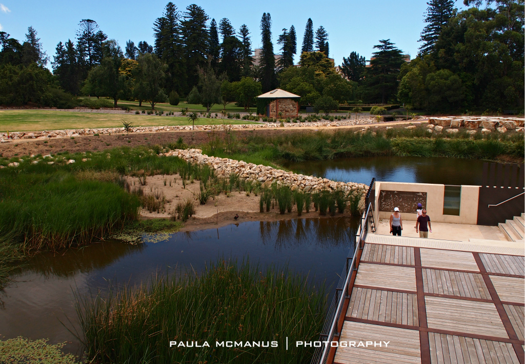 First creek wetland adelaide for Adelaide gardens