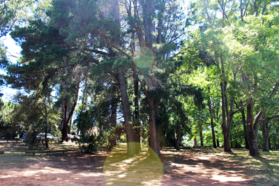 forestry oval, sports ovals, yarralumla 2, trees, exploring, imaginative play, kids games
