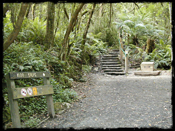 gay meet up, gay day hike, glistening gays of melbourne, dandenong ranges, 1000 steps, ferntree gully