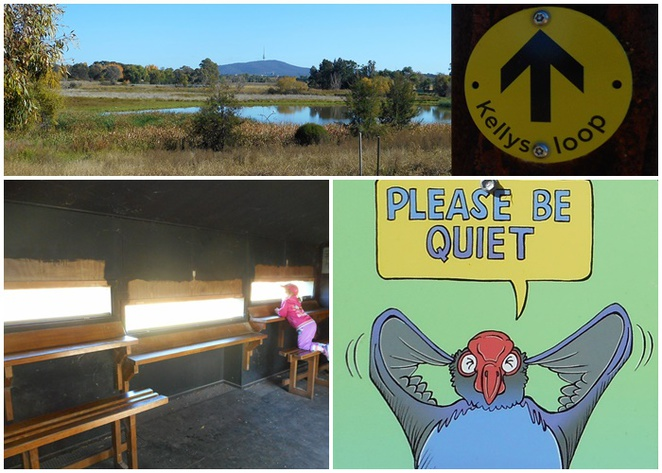 jerrabomberra wetlands, kingston foreshore, canberra, lake burley griffin, eastern loop, kids, families, free, bird life,