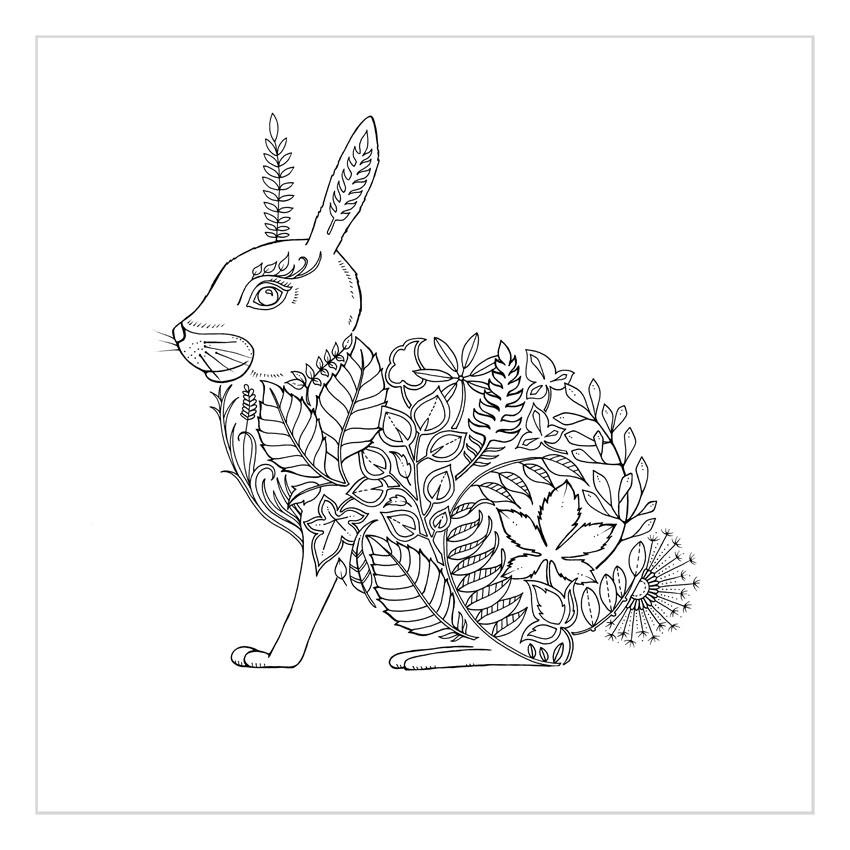 Johanna Basford Secret Garden Enchanted Forest Colouring In
