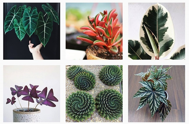 lovely,plants,for,sale