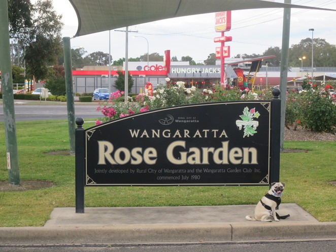 merriwa park, melbourne, wangaratta, dog friendly, picnic, art, street art, victoria, park, outdoors, free, wangaratta rose garden, flowers, flower display, nature