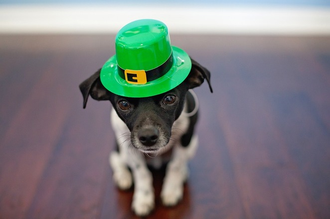 St Patrick, St Paddy, Alcohol, dog, green