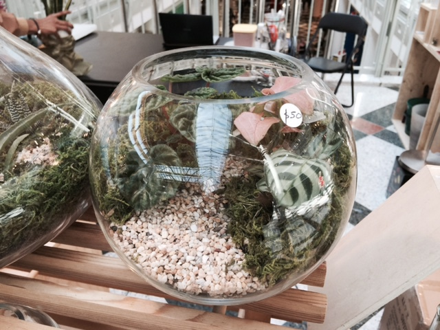 Terrarium Laboratory Buy Or Make Your Own Melbourne