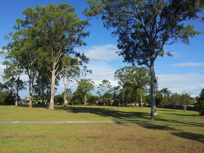 trees,park,free,brisbane,mulbeam park