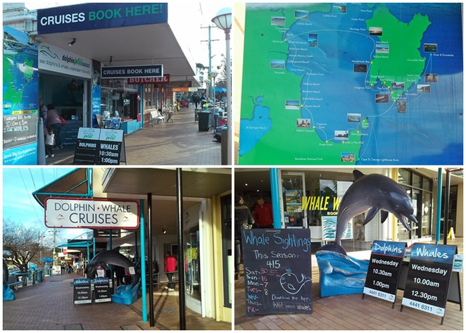 whale watching, huskisson, jervis bay, NSW, south coast, whales, dolphins, road trips from canberra