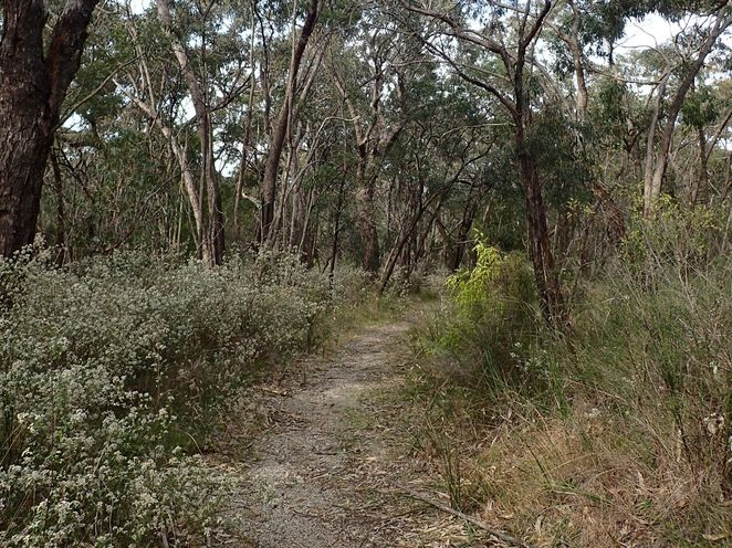 Baluk Willam Reserve, Belgrave South, wildflowers, walks, nature, native plants, photography