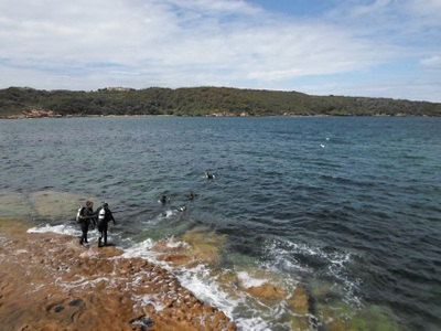 bare island diving