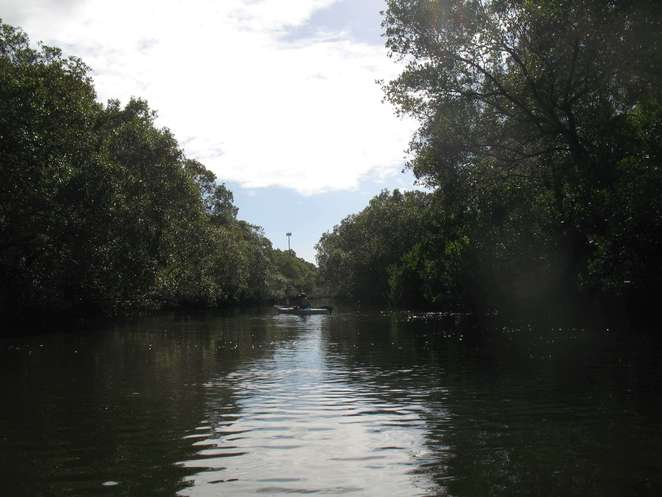 Bulimba Creek near Murarrie