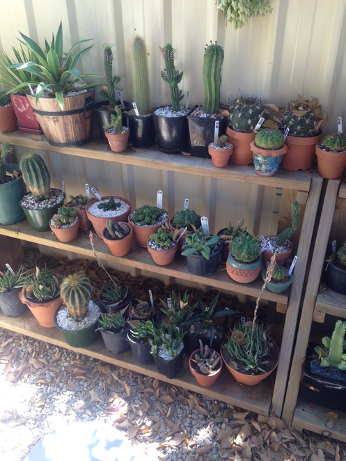 cactus creations, mclaren vale, adelaide gardening, gardening, succulents adelaide, cheap cactuses, garden centre, things to do in mclaren vale, original christmas gifts