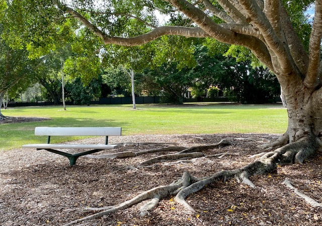 A bench in the shade of a beautiful fig tree overlooking the playground