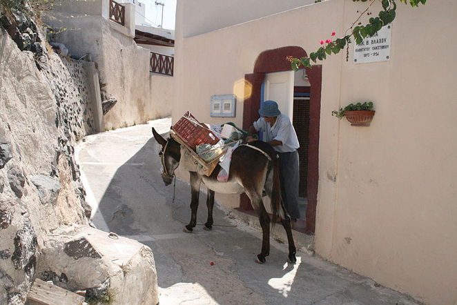 Donkeys in Santorini