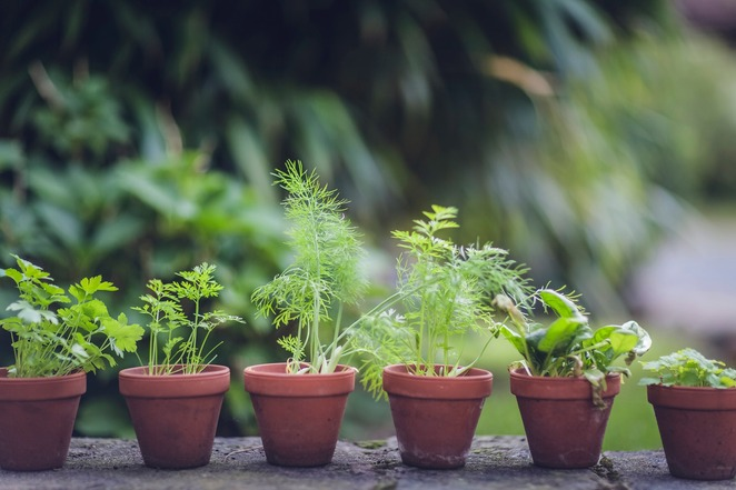 grow herbs at home, deep green permaculture, plant, propagate, harvest, dry and store herbs, community event, fun things to do, online herb growing event, stonnington city council, gardening, herbs in your cooking, save money, reduce packaging waste, herb growing workshop