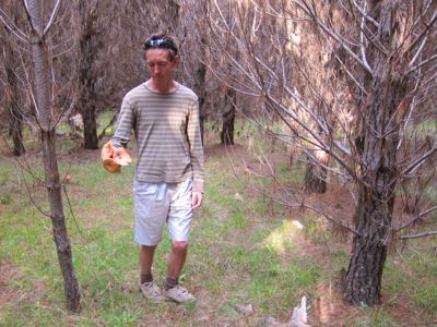 mushrooming in Jenolan State Forest, NSW