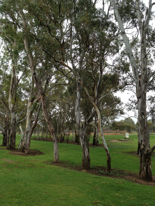 Nuriootpa Tolley Reserve, playgrounds in Adelaide, best playgrounds in Adelaide, family attractions in Adelaide, cheap family day in Adelaide, family attractions in Barossa