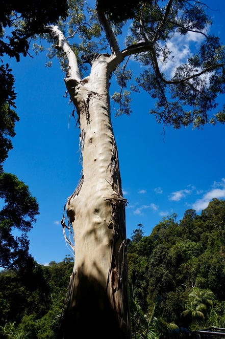 One of the beautiful tall trees