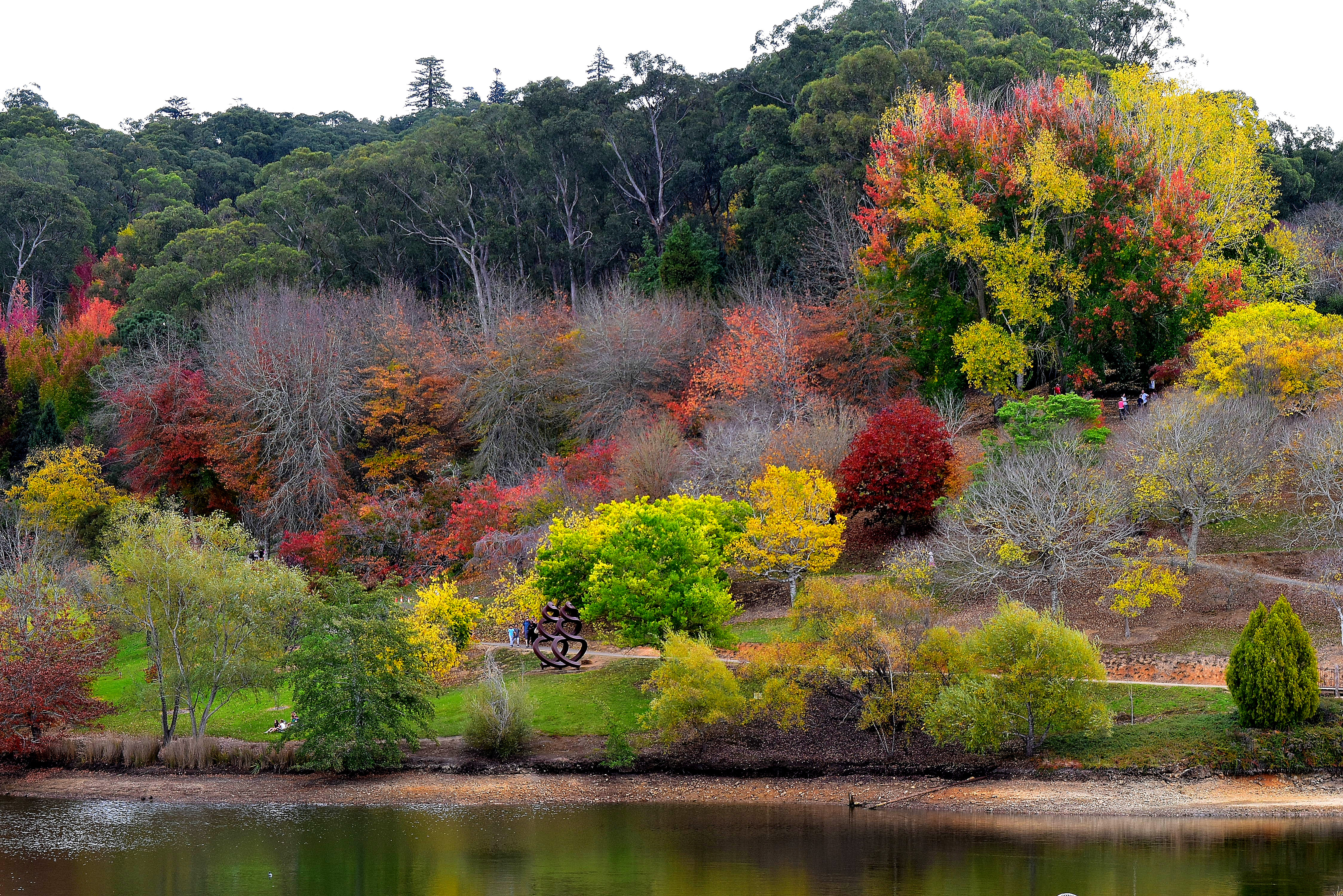 Mount lofty botanical gardens adelaide by jane mckinnon for Landscaping courses adelaide