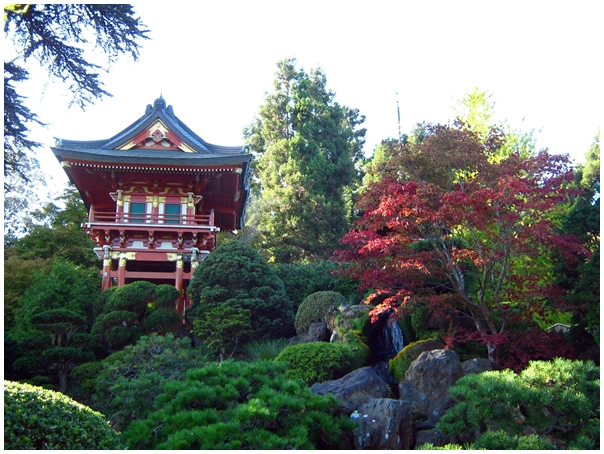 Best Places to visit in San Francisco, San Francisco bay area, Japanese Tea Garden
