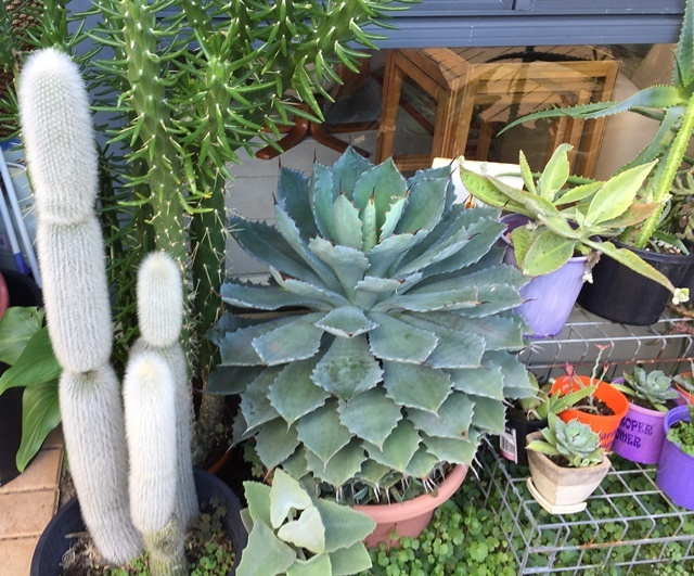 cacti,and,succulents