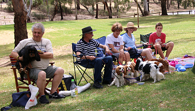 cavalier, king, charles, spaniel, capers, funday, spectators